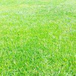 「隣の芝生は青く見える」になっていませんか?